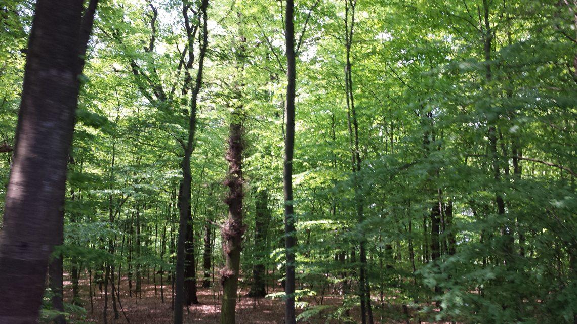 Der Filder Busch im Frühling